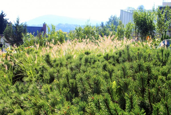Evergreen Gartenbau blühende gärten mit tollen details fischer gartenbau embrach